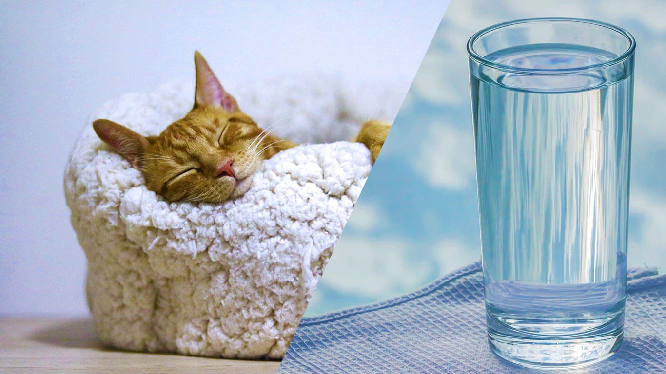 ders çalışırken su ve uyku